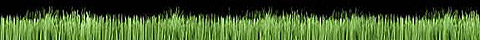 ARTIFICIAL GRASS - AN AFFORDABL LUXURY